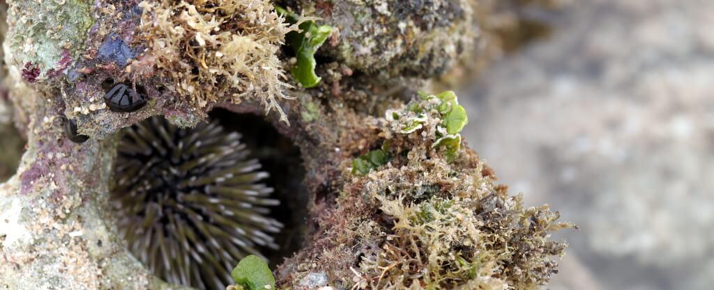coralhole